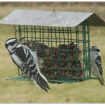 Two black and white woodpeckers sitting on a feeder